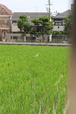 Img_0655sumiyosi